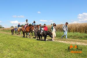 Trekking mit Muli und Pferd