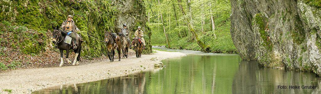 Wanderritt Wald Wacholder Wasser